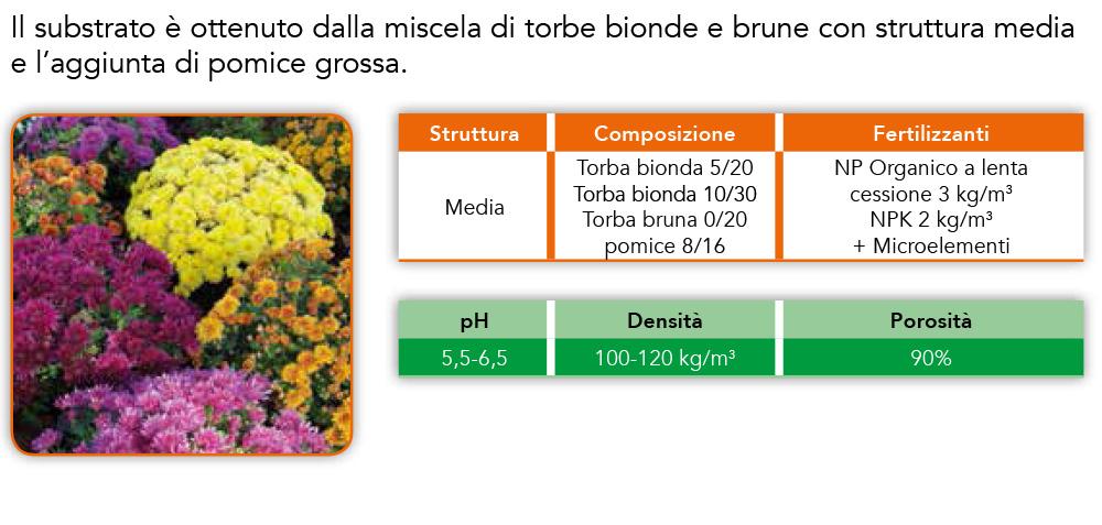 prod_crisantemo